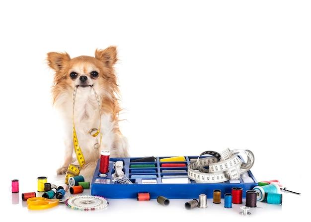 ミシンアクセサリーと白い背景の前に小さな犬