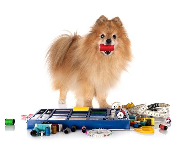 白い背景の前に裁縫アクセサリーと小さな犬