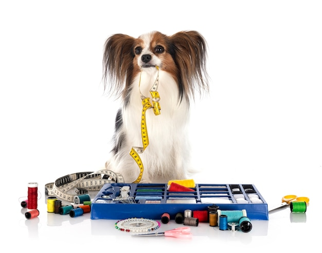 Швейные аксессуары и маленькая собачка спереди на белом изолированные