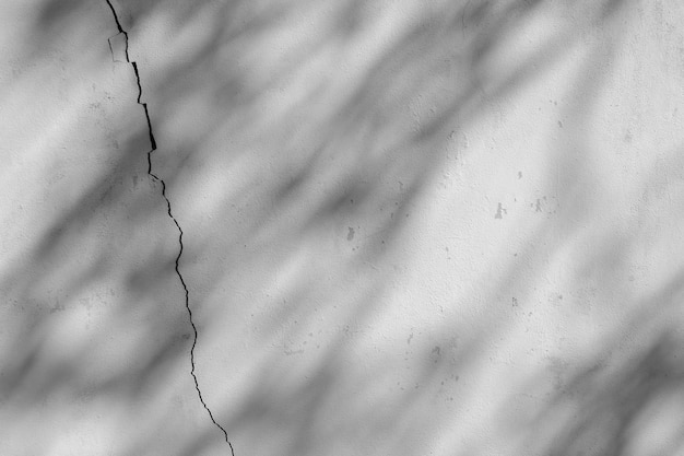 Shadow of branch and leaf on a cracked white concrete wall