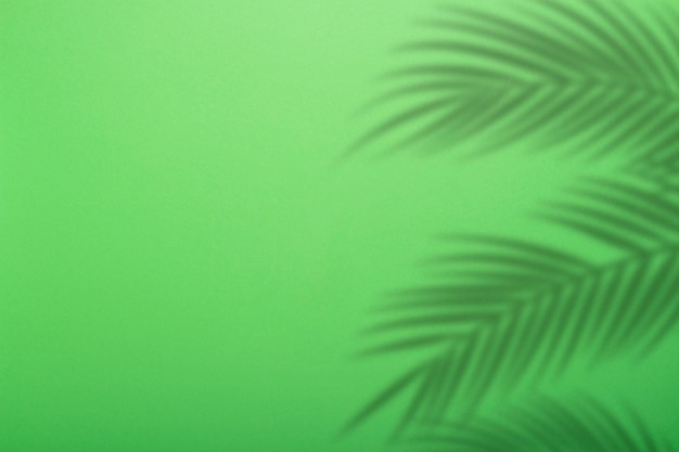 Shadow from palm leaves on a background of green wall. green background, cardboard. abstract image. tropic concept