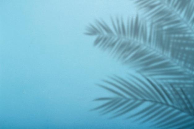 Тень от пальмовых листьев на фоне голубой стены. синий фон, картон. абстрактное изображение