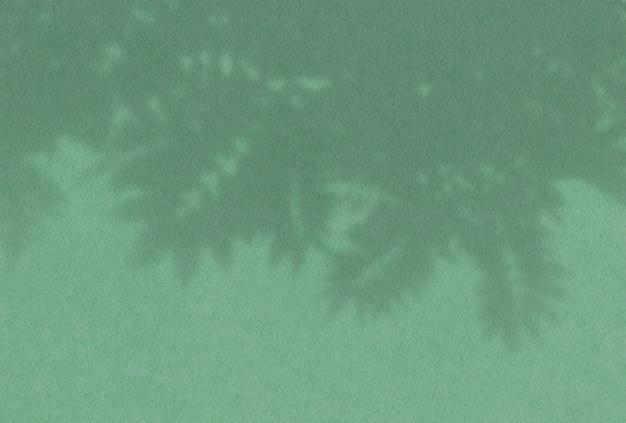 緑の壁のナナカマドの枝の葉からの影