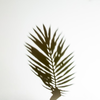 Shadow of hands holding palm leaf on white backdrop