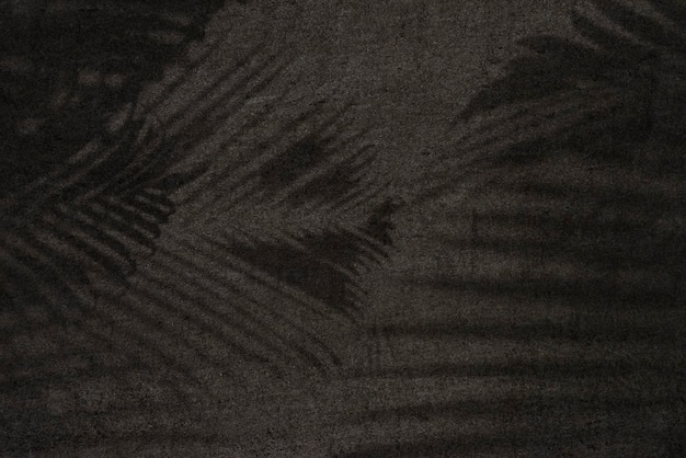 Shadow of leaves on a black