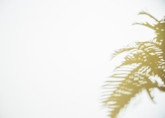 Shadow of leaves on white backdrop