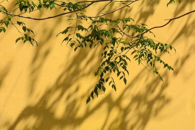 黄色いコンクリートの壁に葉と枝の影