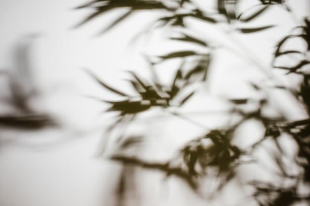 ぼやけた葉の白い背景で隔離の影