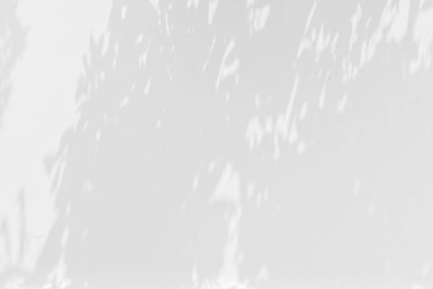 白い壁に枝と葉の影