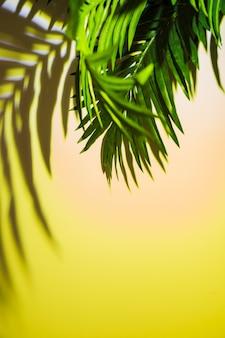 色付きの背景上の緑の葉の影