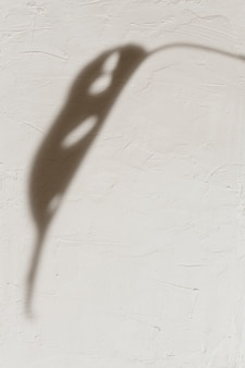 Тень листа на белом фоне