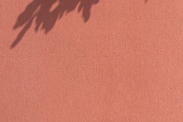 オレンジ色の壁の葉の影