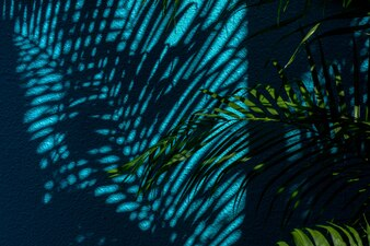 Shadow of palm leaves on blue concrete wall