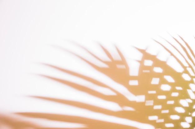 손바닥의 그림자 흰색 배경에 나뭇잎
