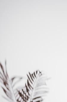 ヤシの影が白い背景に葉します。