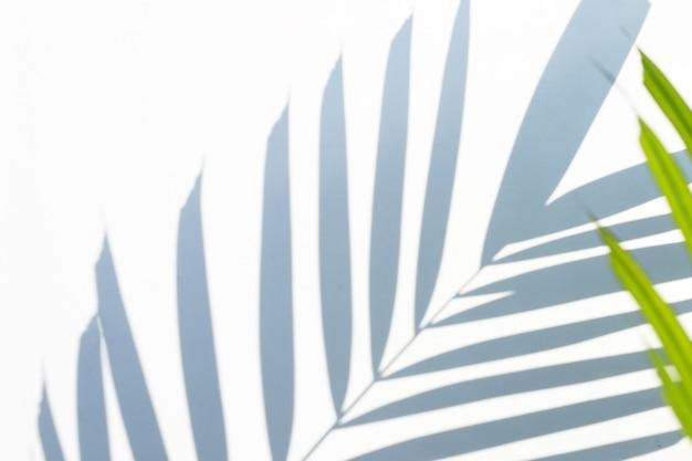 Тень поверхности тропических пальмовых листьев