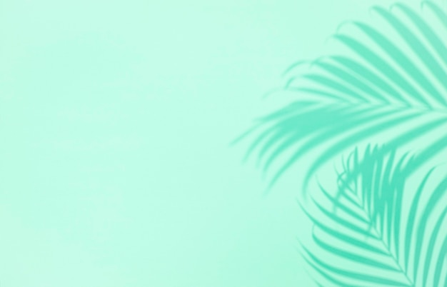녹색 배경, copyspace에 열 대 야자수 잎의 그림자. 최소한의 여름 개념