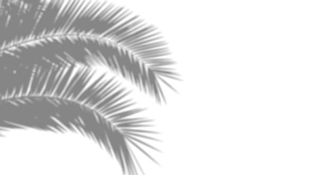 사진에 대한 그림자 오버레이 효과. 햇빛에 흰 벽에 야자수 잎과 열대 가지에서 흐릿한 그림자. 고품질 사진