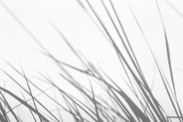 Эффект наложения теней для фото. травы и тени растений на белой чистой стене в солнечном свете
