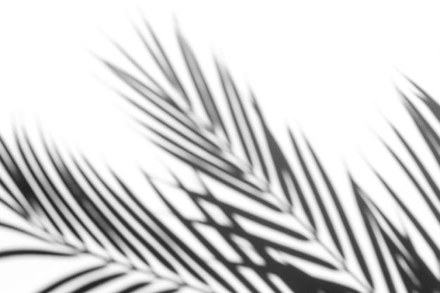 Эффект наложения теней для фото. тени от пальмовых листьев и тропических ветвей на белой стене в солнечном свете.