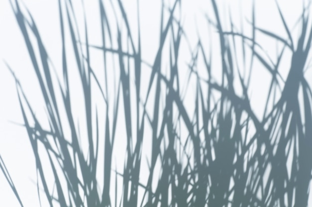 햇빛 고품질 사진의 흰 벽에 있는 나무 잎과 열대 나뭇가지의 사진 그림자에 대한 그림자 오버레이 효과