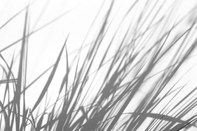 シャドウオーバーレイ効果。日光の下で白いきれいな壁に草や植物の影