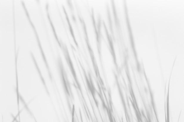 Эффект наложения теней. травы и тени растений на белой чистой стене в солнечном свете