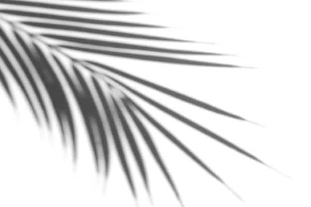 Эффект наложения теней. тени от пальмовых листьев и тропических ветвей на белой стене в солнечном свете.