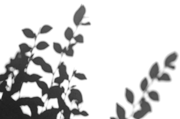 그림자 오버레이 효과. 햇빛에 흰 벽에 나무 잎과 열대 가지의 그림자.