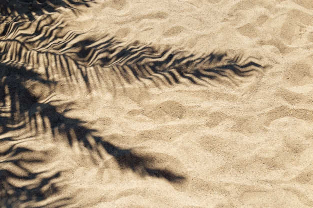 Shadow of a palm leaf on the sand on a hot  sunny day.