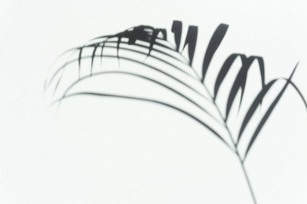 야자수의 열대 가지의 그림자 야자 오버레이 배경 흐릿한 그림자
