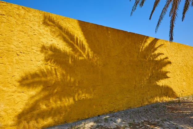 The shadow of a palm tree on a bright yellow wall on a sunny summer day. a symbol of heat, the opposite of light and shadow, good and evil.