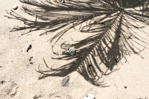The shadow of a palm tree on a sandy beach. vacation concept by the sea