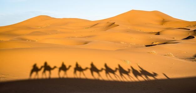 Shadow of tourists caravan riding dromedaries through sand dunes in sahara desert