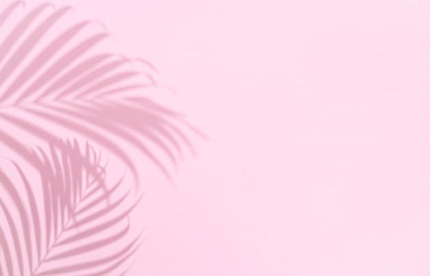 Shadow of tropical palm tree leaf on pink background,  copyspace. minimal summer concept