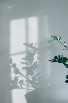 Shadows of flowers house plant on wall wallpapers grey background