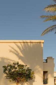 더운 나라 건물의 밝은 벽에 야자수가 드리운 그림자