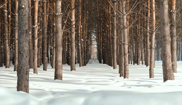 저녁 겨울 숲이나 공원에서 눈의 그림자