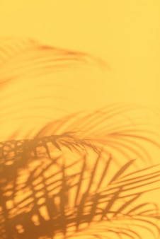 Shadows of tropical palm leaves on pastel yellow wall background.
