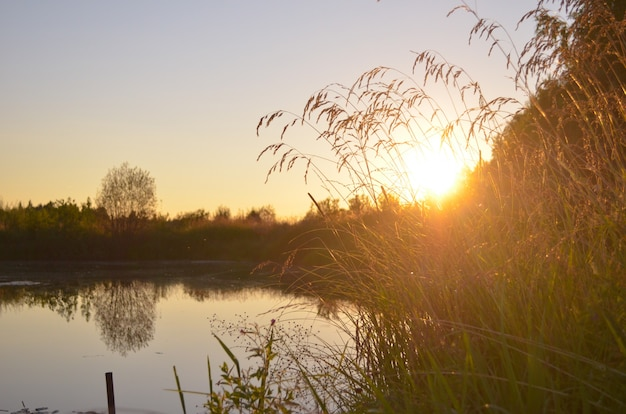 Shady pond with summer grass
