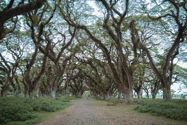 Тенистое дерево, полное тайн