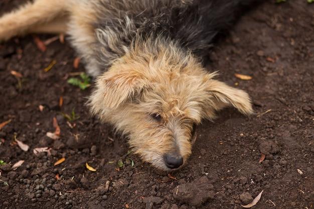 A shaggy homeless brown dog sleeping on the ground.