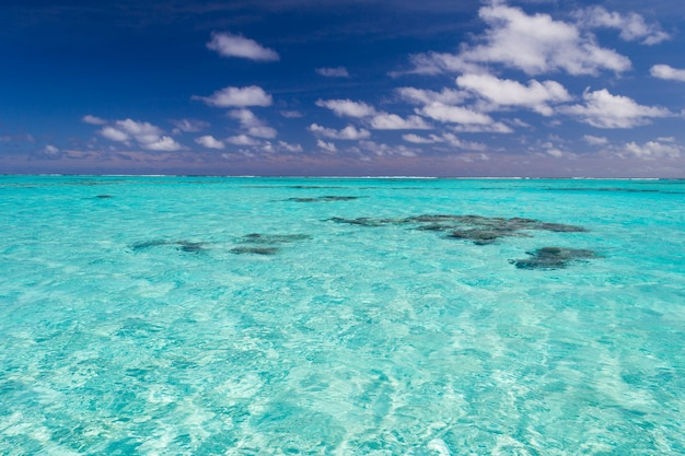 Shallow coral reef in turquoise transparent water, cook islands