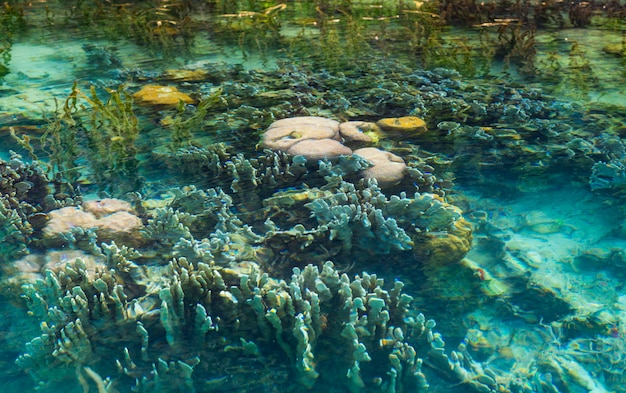 Shallow coral reef in turquoise transparent water