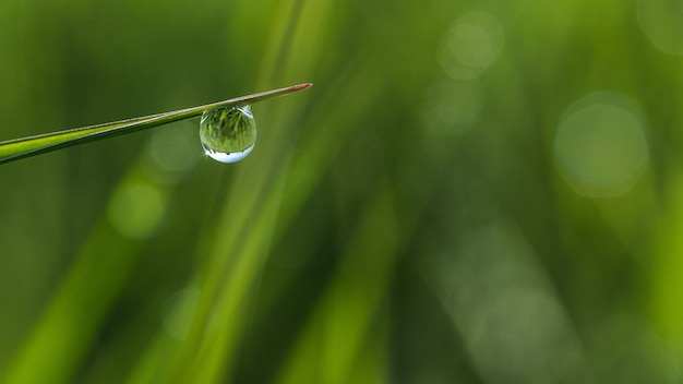 Shallow focus closeup shot of a droplet of dew on the grass with bokeh