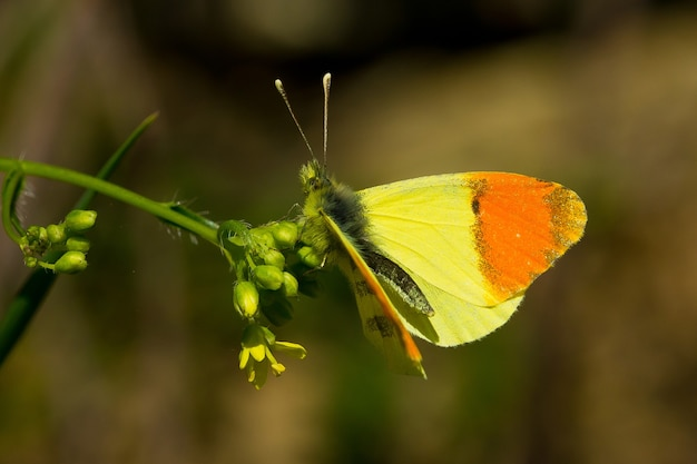 식물에 아름다운 노란색과 주황색 나비의 얕은 초점