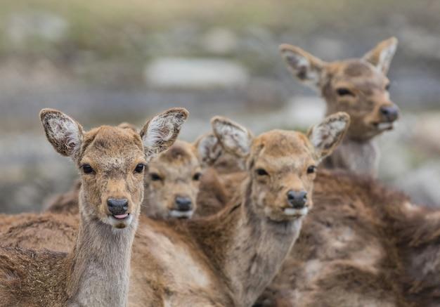야외에서 사슴 떼의 얕은 초점