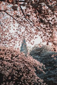 日の出の間に咲くピンクの花の浅い焦点