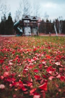 草の上の赤い葉の浅いフォーカス