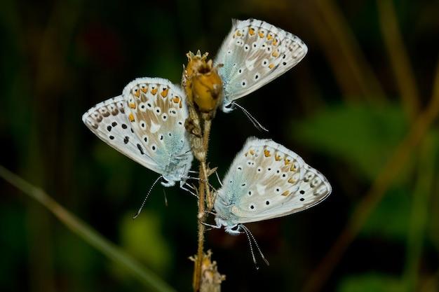 다채로운 점이있는 아름다운 흰색 나비의 얕은 초점